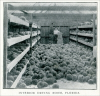 """Interior Drying Room, Florida"" (From the Harrison Supply Company Catalog, Boston, Massachusetts, 1904)"