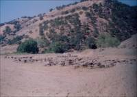 Photograph of cut stone in quarry yard