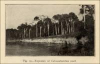 Exposure of Caloosahatchee marl in Florida (circa 1914)