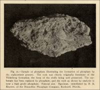Sample of phosphate illustrating the formation of phosphate by the replacement process.  Specimen contributed by H. R. Keyster, of the Dunnellon Phosphate Company, Rockwell, Florida (pp, 85, circa 1914)