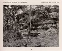 Cliff exposing interbedded, fine-grained, dolomitic marble and phyllite. (Alabama circa 1916)