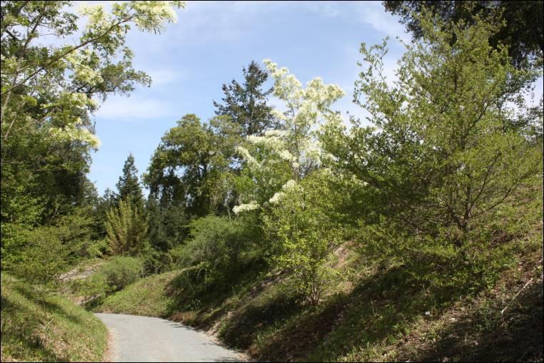 quarryhill botanical garden in glen ellen calif - Quarryhill Botanical Garden